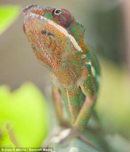 Madagaska14